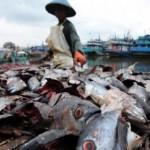 Raup Untung dari Pupuk Organik Berbahan Limbah Ikan