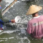 Pendederan Ikan Bandeng