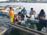 Pembenihan Kerapu Macan di BBIP Busung Kabupaten Simeulue