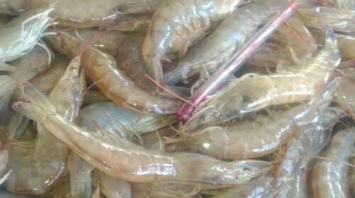 Udang Vaname - Feed Additive