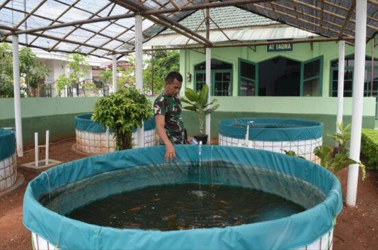 Budidaya Ikan Nila di Lahan Sempit