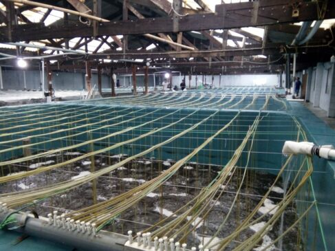 Prospek Cerah Industri Hatchery Udang